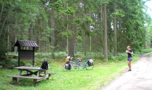 Myggig lunchpaus mitt i skogen