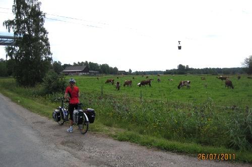 Detta var kalklinbanans dag. En bild med allt som behövs: kalklinbana, tandemcykel och kossor.